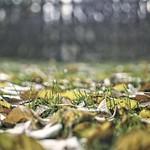 2017:11:18 16:54:29 - Herbst Garten