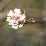 2017:11:20 13:42:50 - Blüten im Herbst