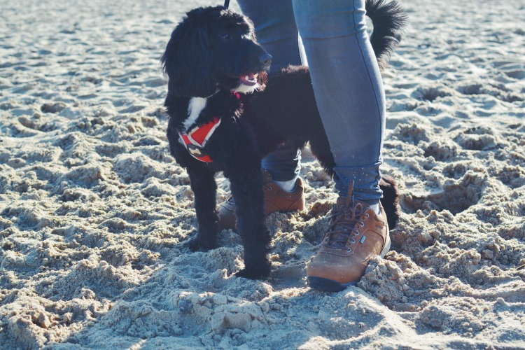 Dog walk Brasher shoes