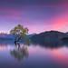Wanaka Blush by Dylan Toh