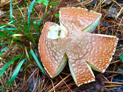 Mushroom, Hurricane Creek Park, Tuscaloosa, Alabama.