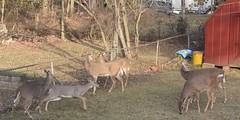 6 deer