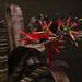 Bromeliad Billbergia 19.3.15