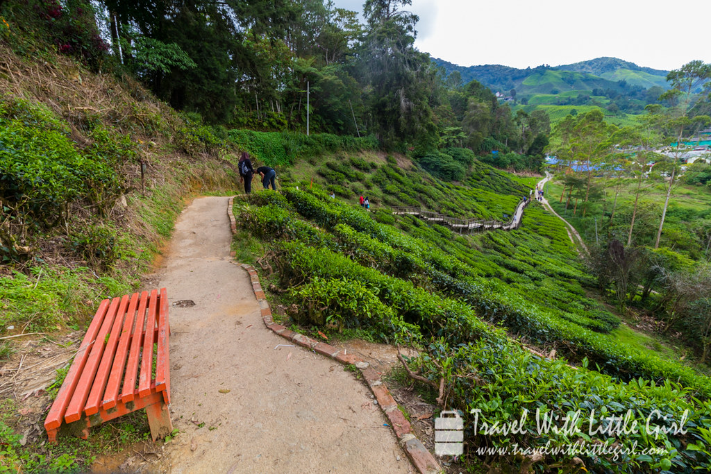 Leaving BOH tea plantation via this route