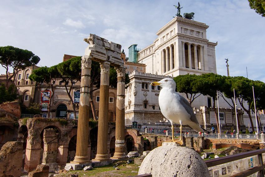 rooma colosseum forum romanum-0858