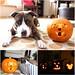 titus-halloween