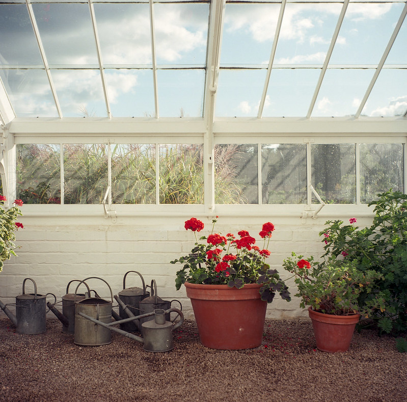 FILM - In the glasshouse