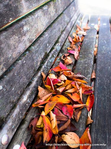 Leaves 20171109 #04