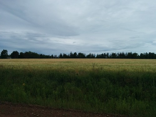 Green field #pei #princeedwardisland #belfast #campbuchan #longcreek #latergram