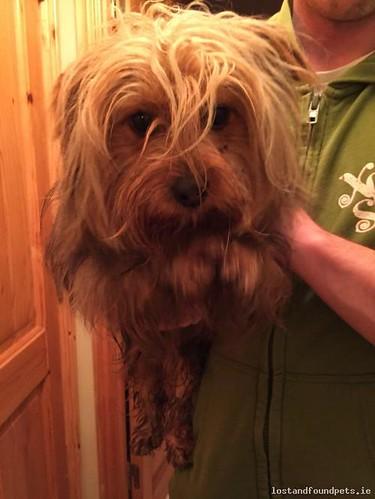 Sat, Nov 11th, 2017 Found Male Dog - Derry Road Just Passed The Turn Inn, Derrinturn, Kildare