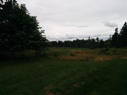 Returning to forest #pei #princeedwardisland #belfast #campbuchan #scouts #northumberlandstrait #latergram