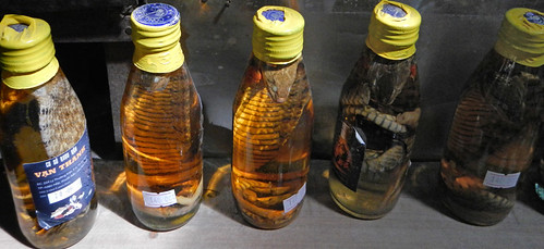 Snake in a bottle in a snack factory on the Mekong River in Vietnam