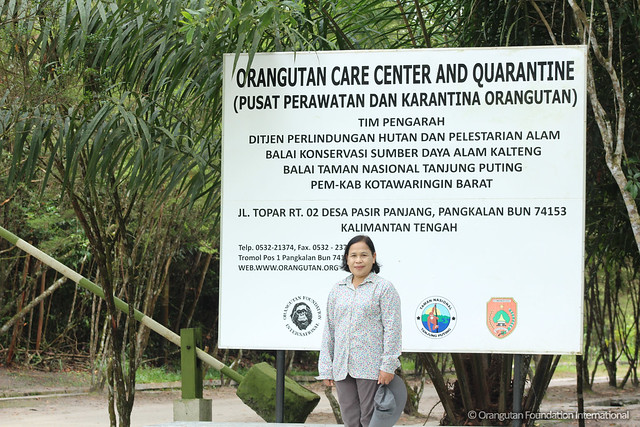 Employee spotlight Ibu Waliyati Orangutan Foundation International wildlife orangutan rescue conservation