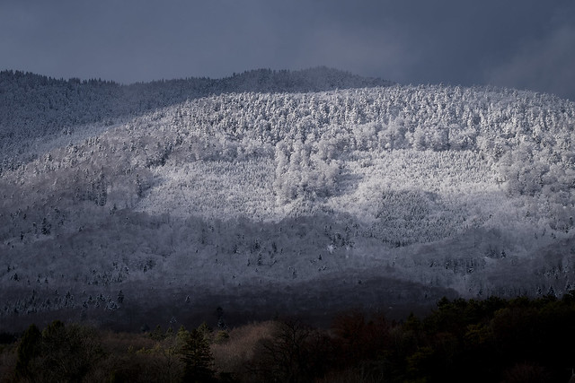 Fresh snow in the, Fujifilm X-Pro2, XF90mmF2 R LM WR