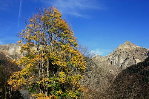 Couleurs d'automne au Rivier d'Allemont