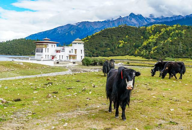 Tibet_-44