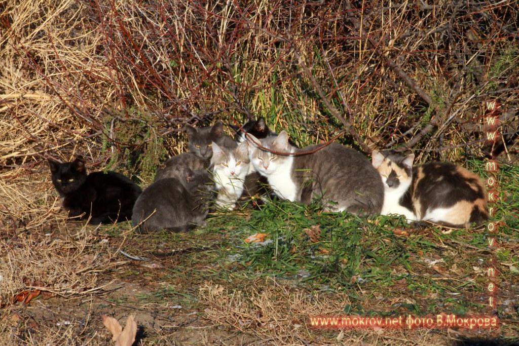 фотографии Кошек в Городе Анапа