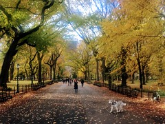 The Mall and Literary Walk Central Park Autumn in NY
