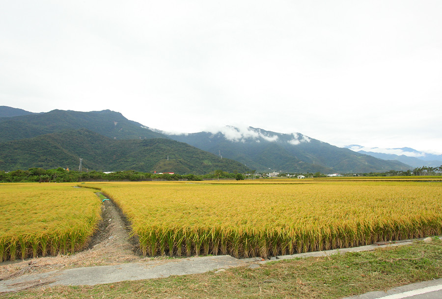 台東景點 關山自行車道12