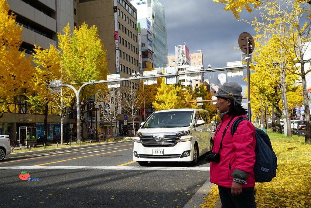 【大阪自由行】帶長輩去賞楓 京都 奈良4天3夜行程景點總整理