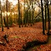 Autumn Colours at Roosthole Woods