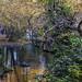 Trees on the banks of the river Lis. Leiria_ by silvinodasilvaphotography