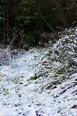 winter has parked its frostiness