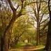 Overgrown toepath #1