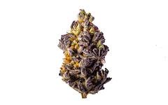 Purple Dolato