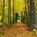 von Bunt zu Blattgold überall, Herbstwanderung im Laub! by baerchen57