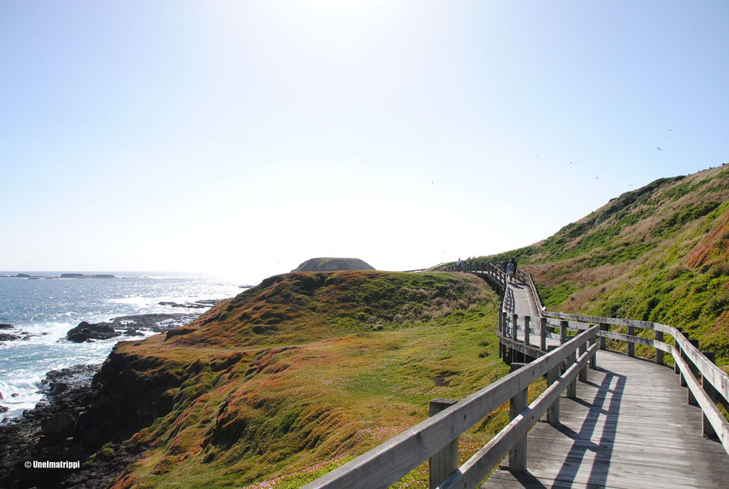 Boardwalk Phillip Islandilla Australiassa
