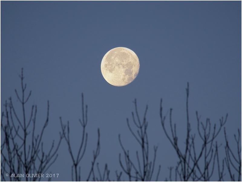 La déjà plus super Lune de ce matin 38130021844_4a0be2cc68_o