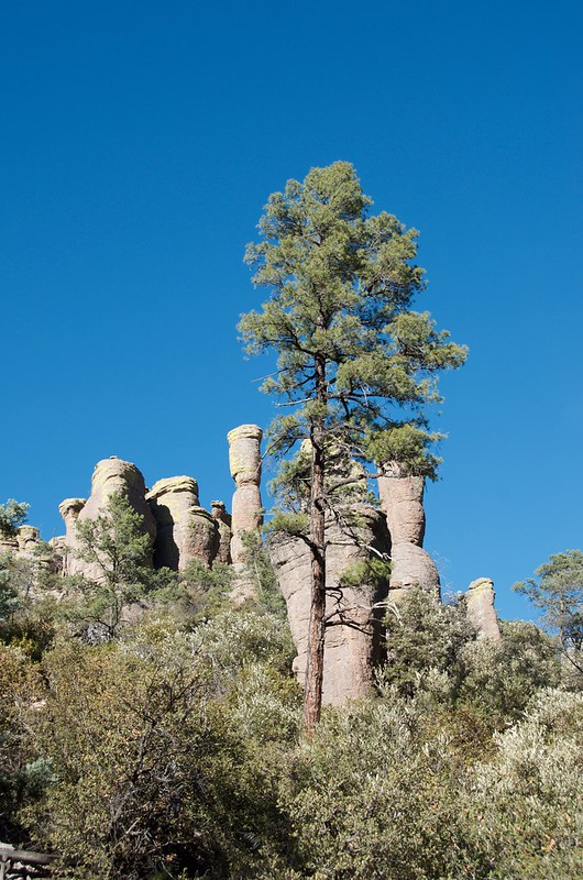 Chiricahua National Monument with hoodoo and tree