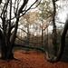 Untitled Autumnal Treescape