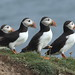 Puffin Group