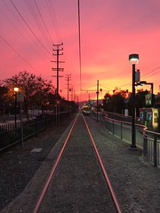 Pink on the Gold Line
