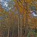 Sharpham Wood Totnes