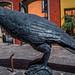 2017 - Mexico - Tequila - Jose Cuervo Raven por Ted's photos - For Me & You