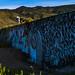 Small photo of Kealia Graffiti Wall Pit Bull
