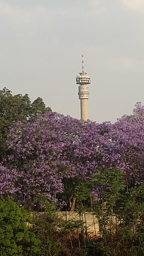 johannesburg johannesburgskyline southafrica south africa jacarandas jacaranda tree trees flower flowers tower towers hillbrowtower hillbrow colour purple green greenery nature outdoors travel city cities