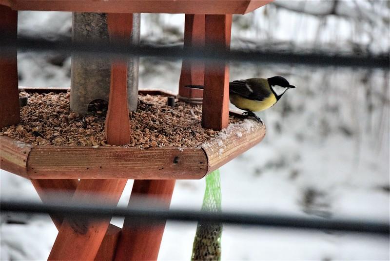 Birdhouse 01.12 (2)
