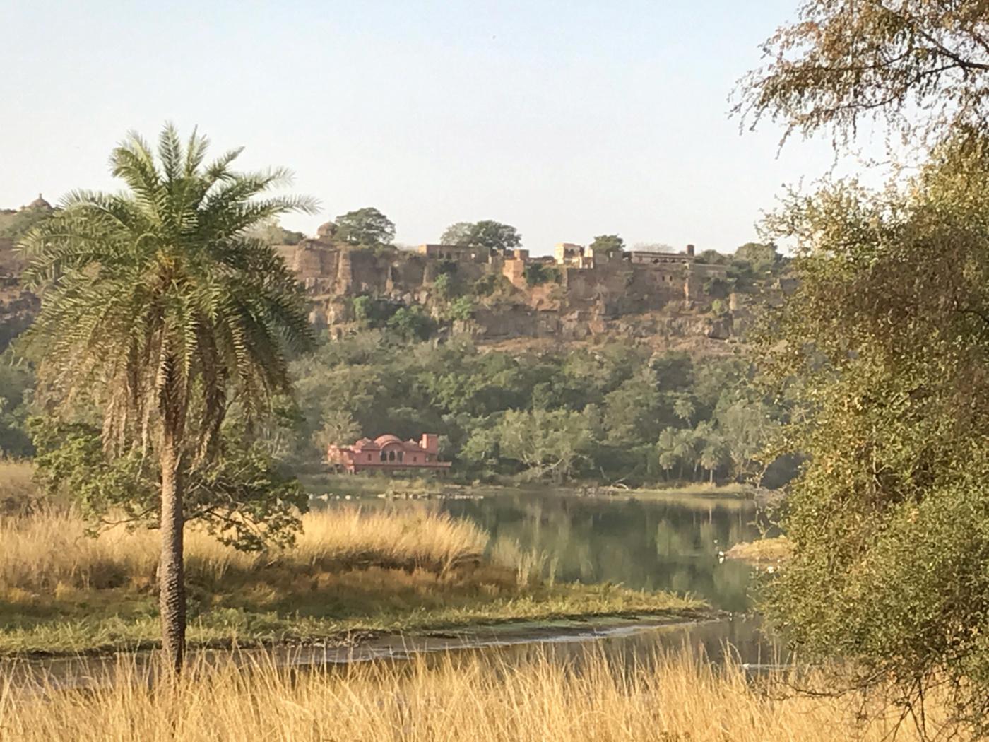 102-India-Ranthambore
