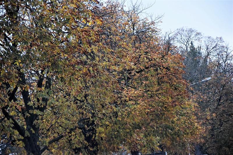 Autumn 08.11 (3)