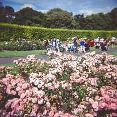 Raheny Rose Festival 1.