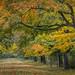 Departure for autumn by Jean-Luc Peluchon