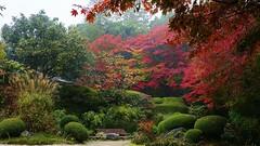 Rainy Garden / Kyoto Shisendo