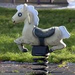 Bendy horse at Haslam Park