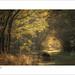 Savernake Forest by tobchasinglight