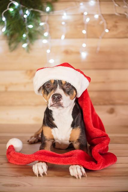 2017 Christmas-7115