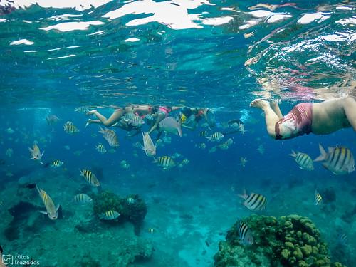 Snorkeling Cozumel